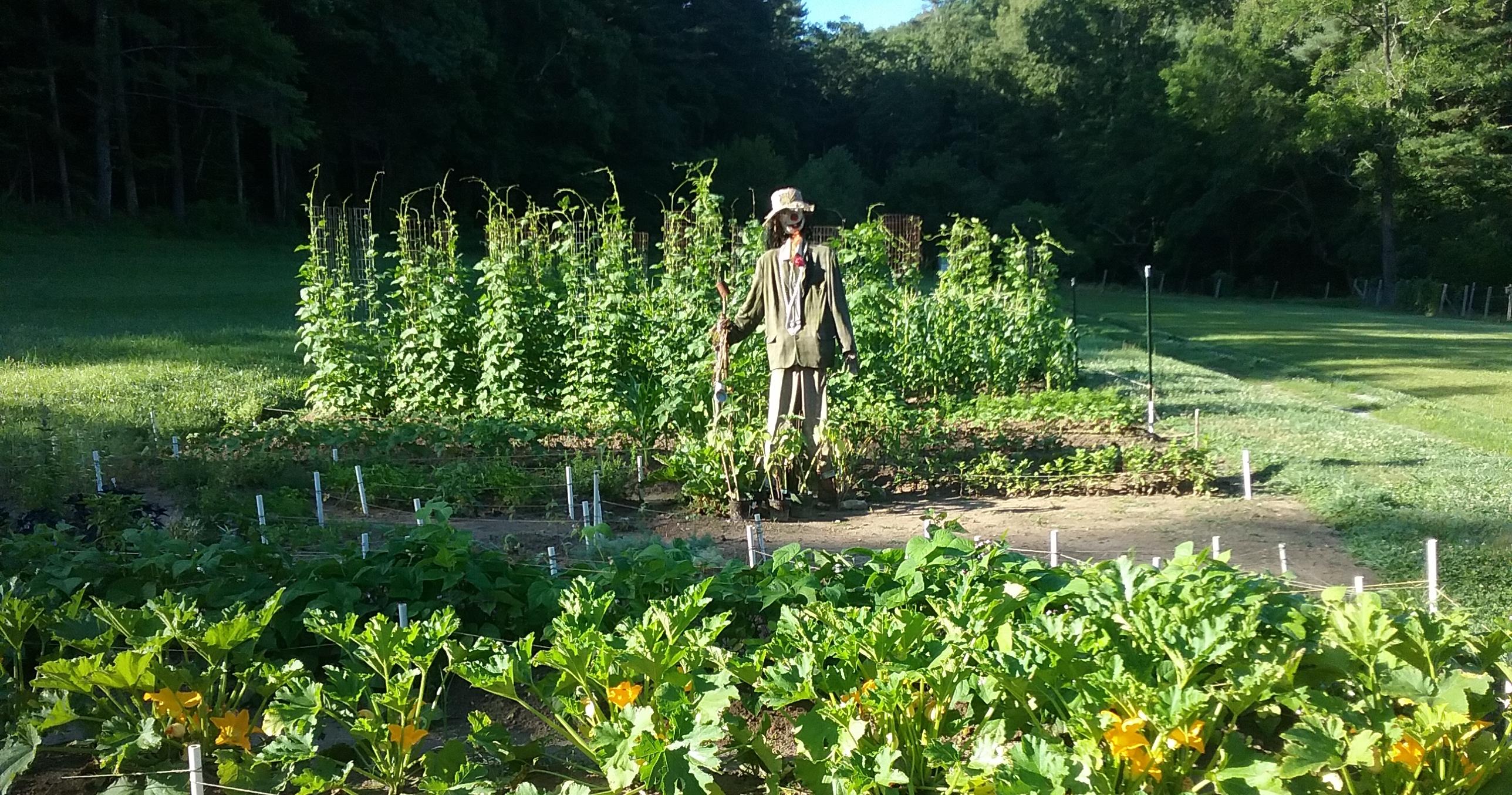 Connemara garden